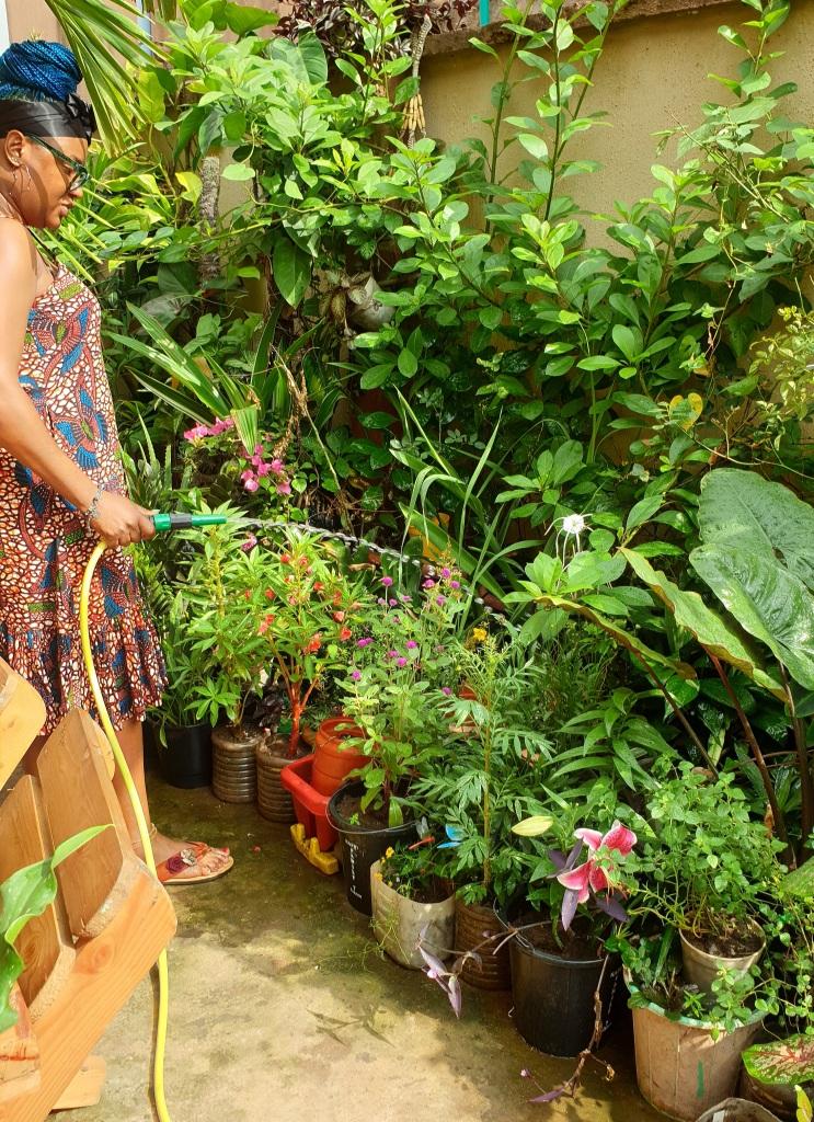 Watering a tropical garden